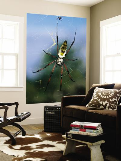 Female (Large) and Male (Small) Giant Orb-Weaving Spiders (Nephila Sp.) on Web-Karl Lehmann-Wall Mural