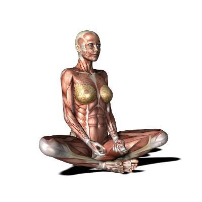 Female Muscles, Artwork-Friedrich Saurer-Photographic Print