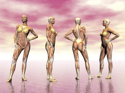 Female Muscular System from Four Points of View--Art Print