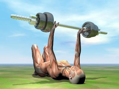 Female Musculature Exercising with a Dumbbell--Art Print