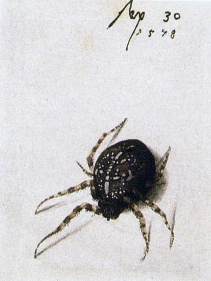 Female Spider, 1578-Joris Hoefnagel-Giclee Print