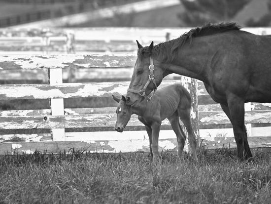 Female Thoroughbred and Foal, Donamire Horse Farm, Lexington, Kentucky-Adam Jones-Photographic Print