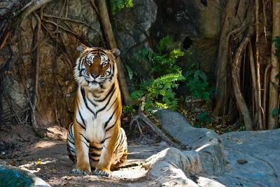 Female Wild Tiger From Thailand-sasilsolutions-Photographic Print