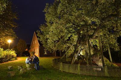 Femeiche' the Court Tree at Night-Solvin Zankl-Photographic Print