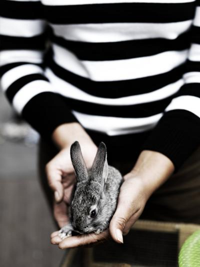 Feminine Hands Holding a Small Pet Rabbit-xPacifica-Photographic Print