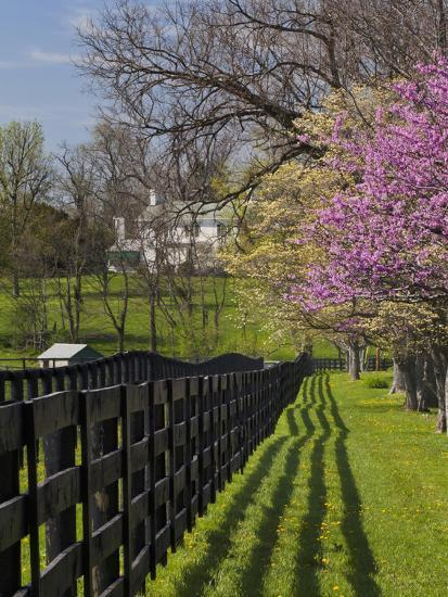 Fence and Dogwood and Redbud Trees in Early Spring, Lexington, Kentucky, Usa-Adam Jones-Photographic Print