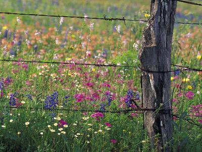 Fence Post and Wildflowers, Lytle, Texas, USA-Darrell Gulin-Photographic Print