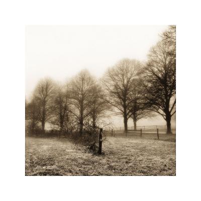 Fence Row and Trees-Harold Silverman-Art Print