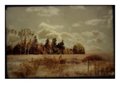 Fenced Field with Trees and Grass-Mia Friedrich-Photographic Print
