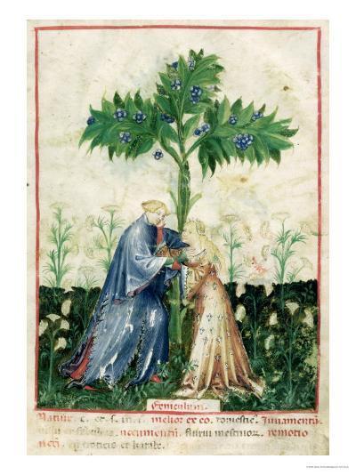 Fennel, from Tacuinum Sanitatis, c.1390-1400--Giclee Print