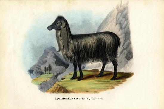 Feral Goat, 1863-79-Raimundo Petraroja-Giclee Print