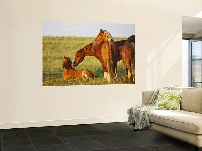 Feral Horse in the High Sagebrush Country East of Cody, Wyoming, USA-Larry Ditto-Giant Art Print