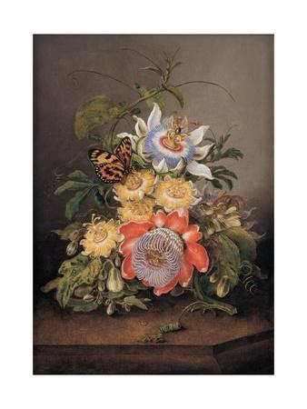 Passionflowers, 1812