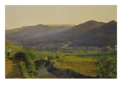 Landschaft Mit Weinbergen