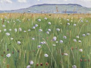 Meadow of Flowers, about 1901 by Ferdinand Hodler