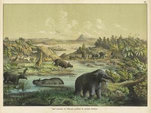 Animals and Plants of the Tertiary Era in Europe by Ferdinand Von Hochstetter
