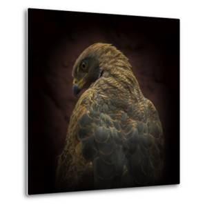 Somebody Watch Me-Savanna Hawk by Ferdinando Valverde