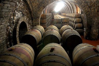Oak Casks Wait for the Grape Juice after the Vintage of Port Wine-Grapes