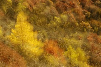 Abstract Shot At Dawn Over A Mixed Woodland In Autumn