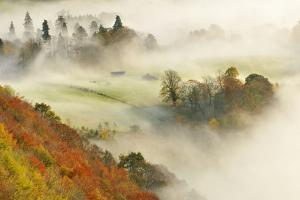 Mist over a Mixed Woodland in Autumn. Kinnoull Hill Woodland Park, Perthshire, Scotland, November by Fergus Gill