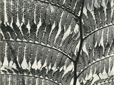 https://imgc.artprintimages.com/img/print/fern-california-1956_u-l-q1g6ljj0.jpg?p=0