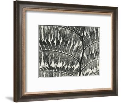 Fern, California, 1956-Brett Weston-Framed Photographic Print
