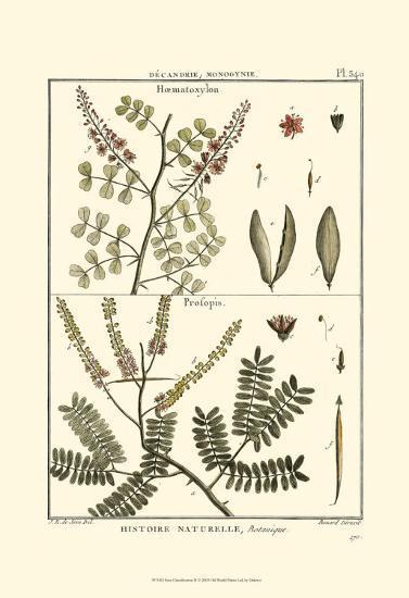 Fern Classification II-Denis Diderot-Art Print