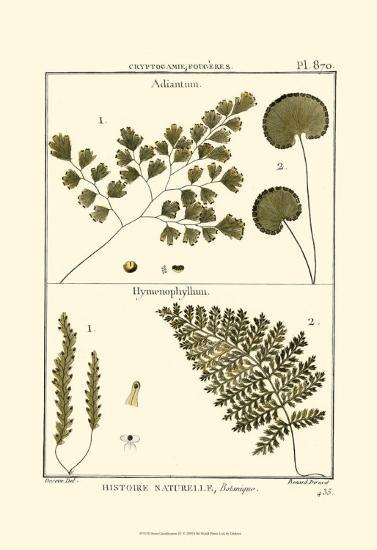 Fern Classification IV-Denis Diderot-Art Print