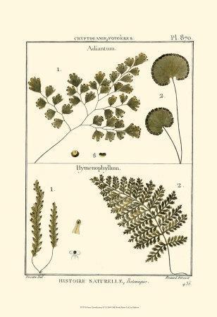https://imgc.artprintimages.com/img/print/fern-classification-iv_u-l-f31u410.jpg?p=0