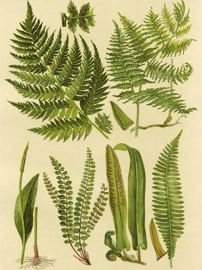 Fern Collection I-Vision Studio-Art Print