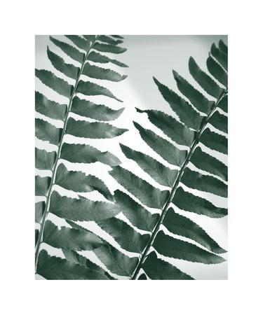 https://imgc.artprintimages.com/img/print/fern-detail-ii_u-l-f5wvxe0.jpg?p=0