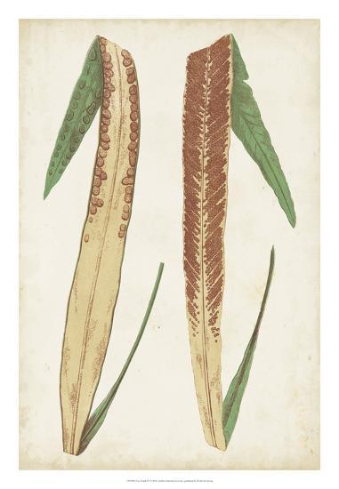 Fern Family IV-Lowe-Giclee Print