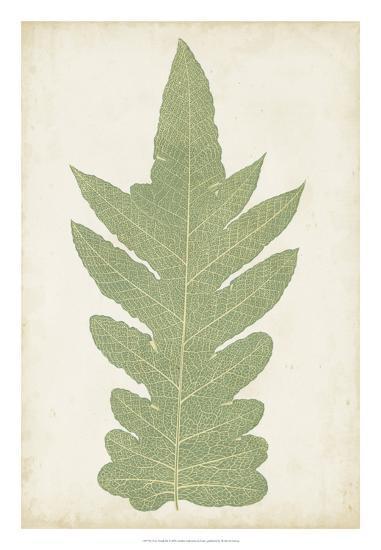 Fern Family IX-Lowe-Giclee Print