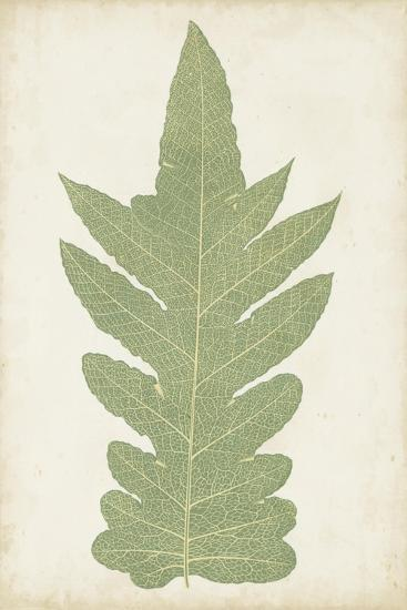 Fern Family IX-Lowe-Art Print