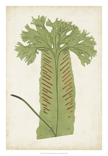 Fern Family V-Lowe-Giclee Print