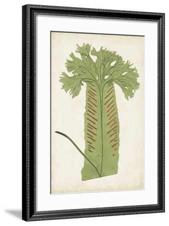 Fern Family V-Lowe-Framed Giclee Print
