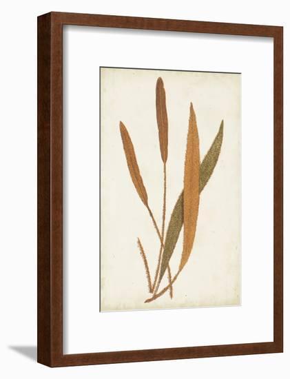 Fern Family VI-Lowe-Framed Art Print