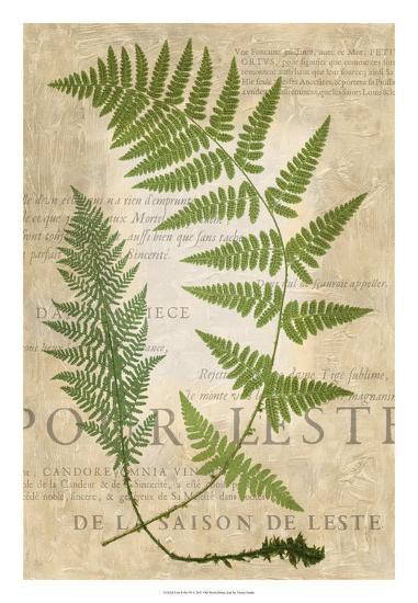 Fern Folio IV-Vision Studio-Giclee Print