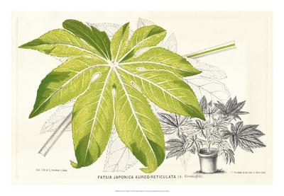 https://imgc.artprintimages.com/img/print/fern-leaf-foliage-i_u-l-f8hs9p0.jpg?p=0