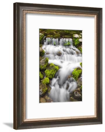 Fern Spring, Yosemite National Park, California, USA.-Russ Bishop-Framed Photographic Print
