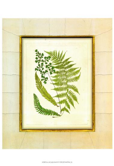 Fern with Crackle Mat II-Samuel Curtis-Art Print