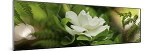 Fern with Magnolia