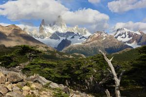 Wide angle landscape featuring Monte Fitz Roy in the background and tree in the foreground, Patagon by Fernando Carniel Machado