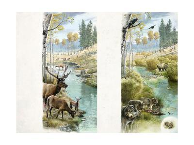 A before and after of Yellowstone's Habitat with and Without Wolves
