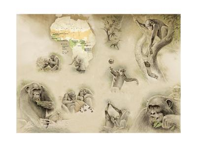 Paintings of Chimpanzees with Map of Africa