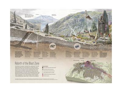 Renewal of Ecosystem in Mount Saint Helens Blast Zone