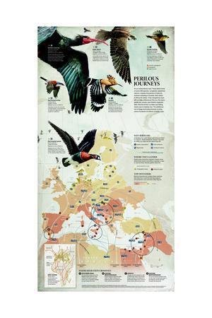 Songbirds, Waterbirds and Raptors Migrate over Eurasia