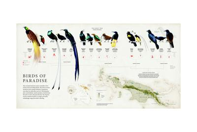 The 39 Species of Birds of Paradise and their Range in New Guinea