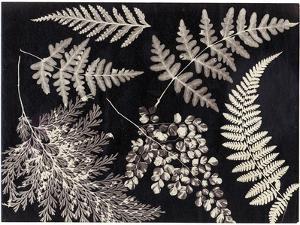 Ferns, C.1880