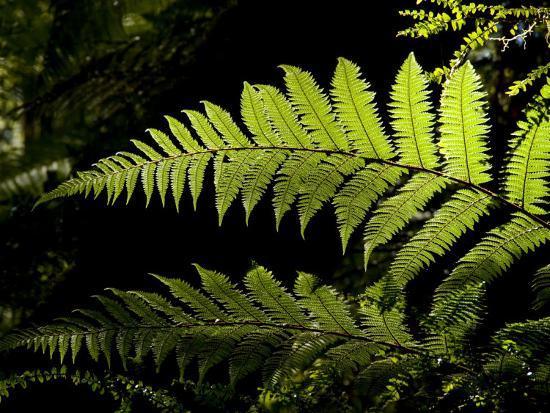 Ferns Growing Along the Kepler Trail, Fiordland National Park, New Zealand-Bill Hatcher-Photographic Print